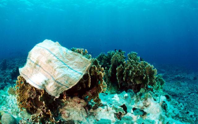Proteggere e conoscere il mare