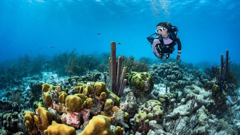 GREEN MOOD Il segreto degli Oceani: beyond the scenes
